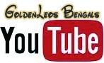 ★Goldenleosの動画集★